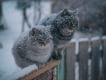 4 декабря в Туле – небольшой снег